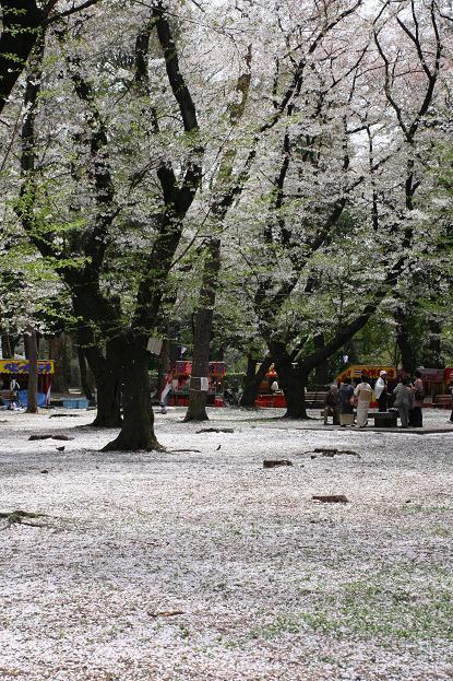 大宮公園 桜の終わり_d0150720_11263414.jpg