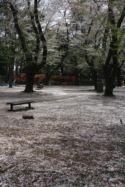 大宮公園 桜の終わり_d0150720_11265476.jpg