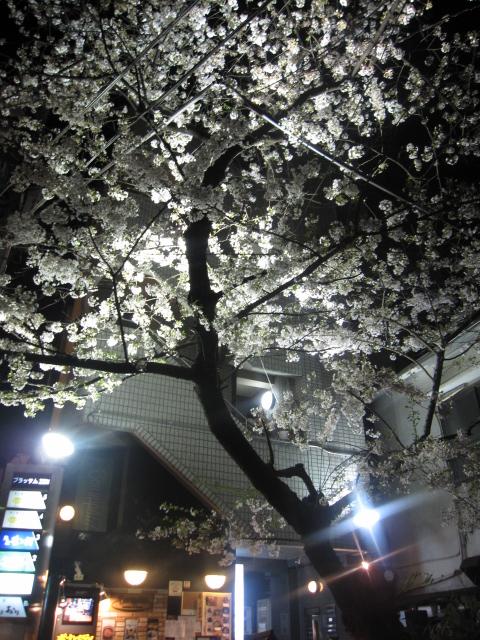 今年の桜_f0180433_1514597.jpg