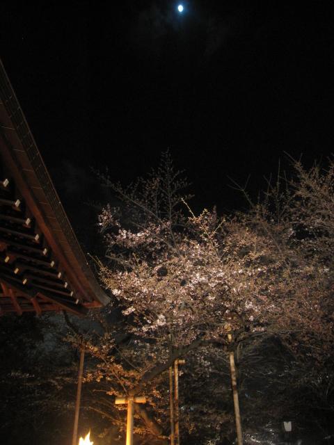 今年の桜_f0180433_15164283.jpg