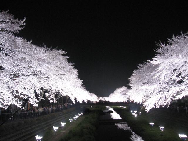 今年の桜_f0180433_15184991.jpg
