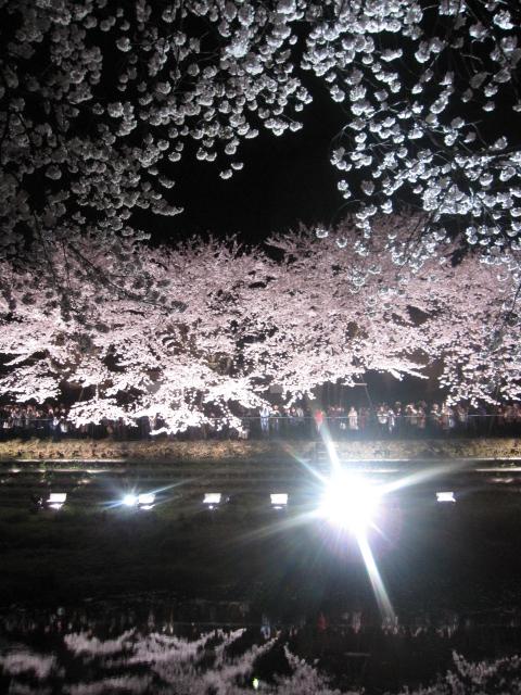 今年の桜_f0180433_15212783.jpg