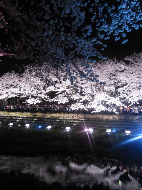 今年の桜_f0180433_15221016.jpg