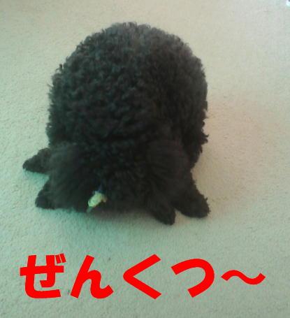 c0117239_871273.jpg