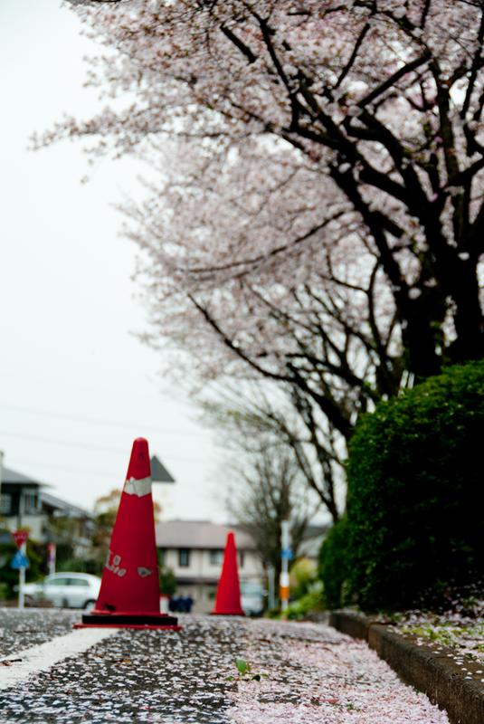 今年の桜ももう終わり[稲城の桜]_d0214541_93883.jpg