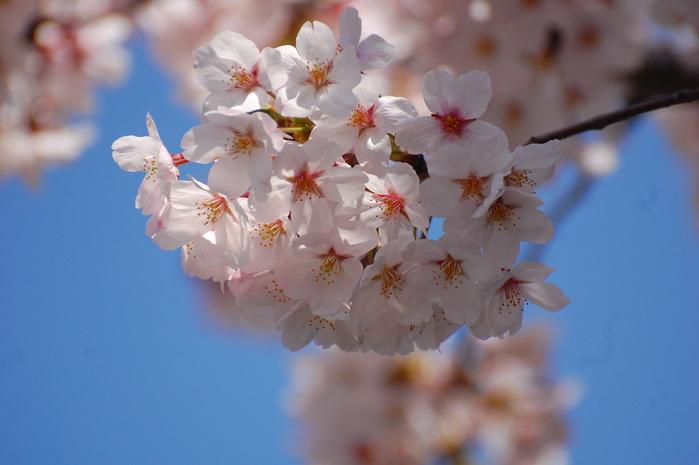 お花見してきました♪_c0001744_1028910.jpg