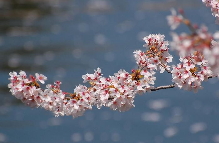 お花見してきました♪_c0001744_10301576.jpg