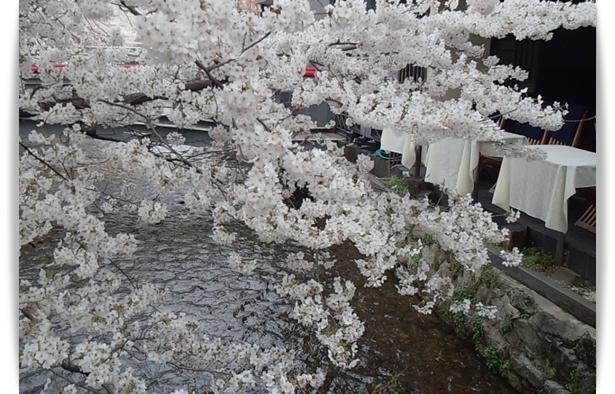 今年の桜は_c0049950_22333347.jpg