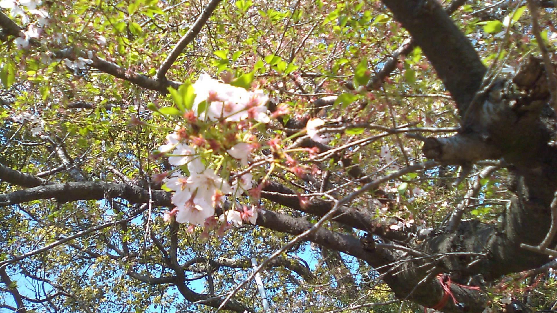 春の例大祭 夜神楽♪_b0115751_23122381.jpg