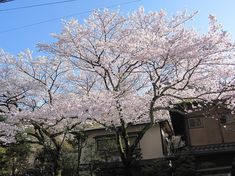2012年4月14日桜実況中継_c0078659_17213620.jpg