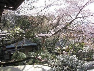 2012年4月14日桜実況中継_c0078659_17315023.jpg