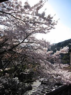 2012年4月14日桜実況中継_c0078659_17363150.jpg