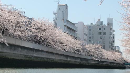水彩都市江東に桜満開_c0249569_16311066.jpg