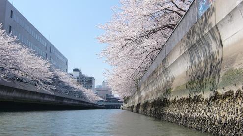 水彩都市江東に桜満開_c0249569_16341377.jpg