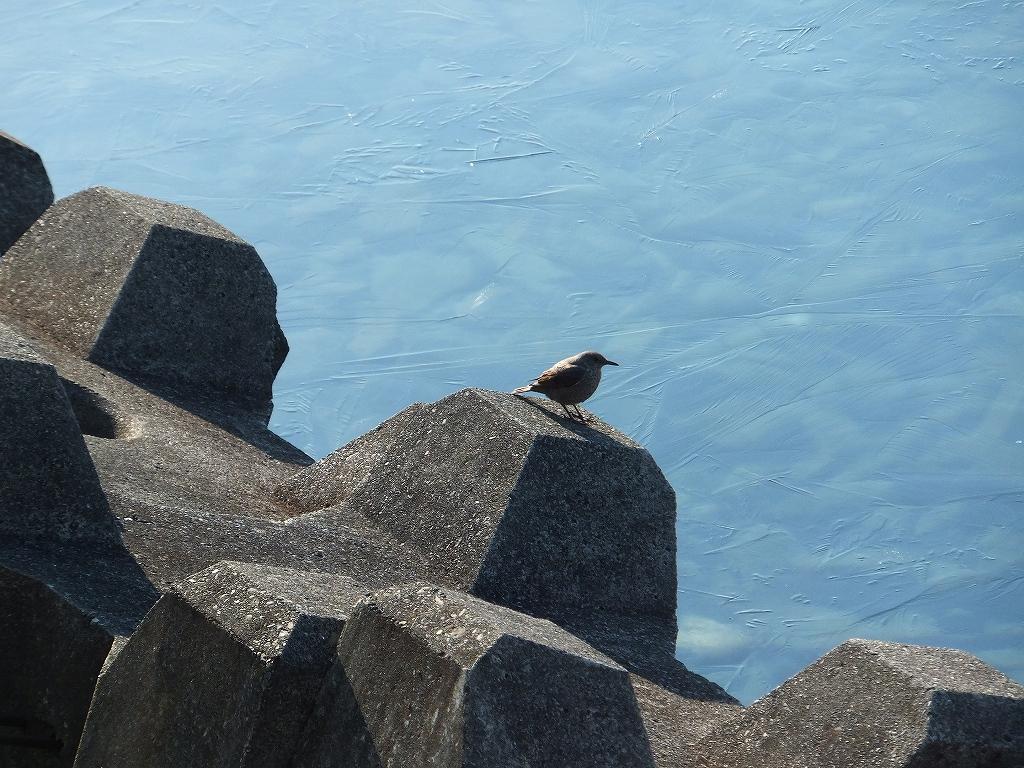 4月14日、空沼岳-その1-_f0138096_1752359.jpg