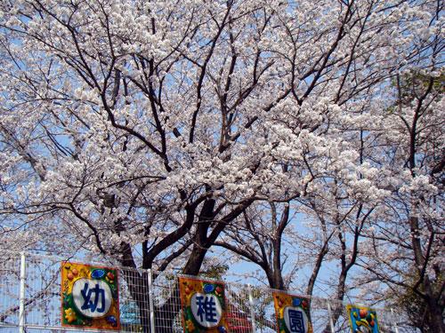 うちからお花見_a0047200_1724987.jpg