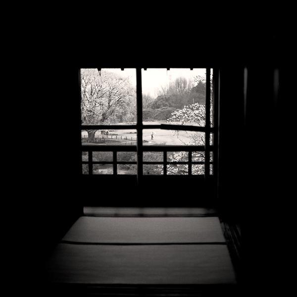窓桜_d0127209_18113521.jpg