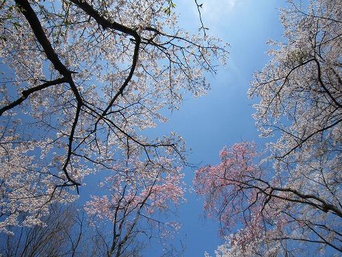 春の風景。_b0157216_2141214.jpg