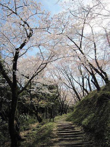 春の風景。_b0157216_21412736.jpg