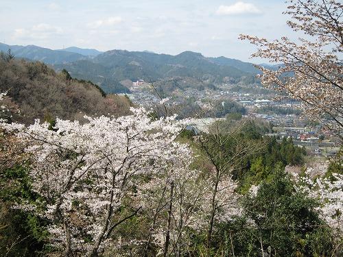 春の風景。_b0157216_2141418.jpg