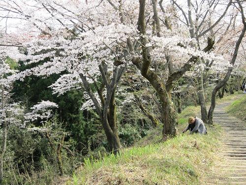 春の風景。_b0157216_2141569.jpg