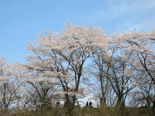春の風景。_b0157216_2142792.jpg