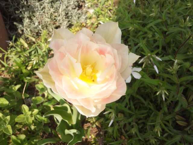 春が開く_d0085018_221517100.jpg