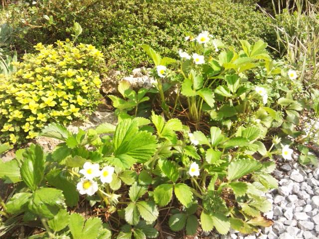 春が開く_d0085018_2255863.jpg