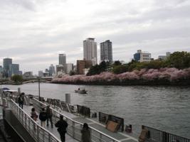 ステルス戦隊パタパタレンジャー、水の都で桜をたんのう!_a0043520_1645482.jpg