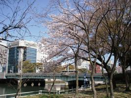 ステルス戦隊パタパタレンジャー、水の都で桜をたんのう!_a0043520_1651918.jpg