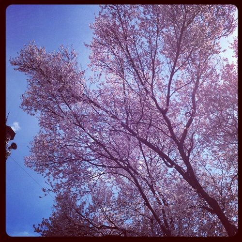 奥野田ワイナリーへ行ってきました。_b0206537_21572549.jpg