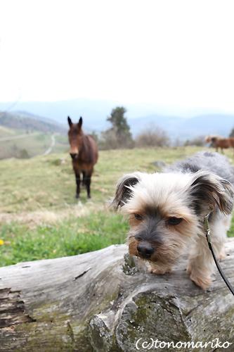 バブー、山奥の農場で…。_c0024345_6191926.jpg