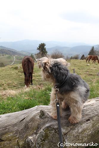 バブー、山奥の農場で…。_c0024345_6194456.jpg