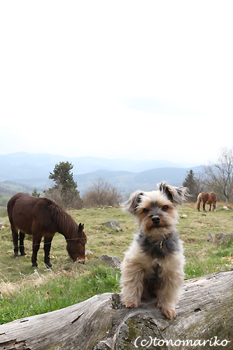 バブー、山奥の農場で…。_c0024345_620258.jpg