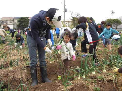 玉ねぎの収穫」_f0079749_910503.jpg