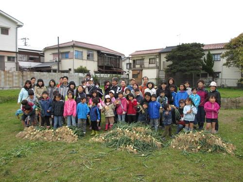 玉ねぎの収穫」_f0079749_9164154.jpg