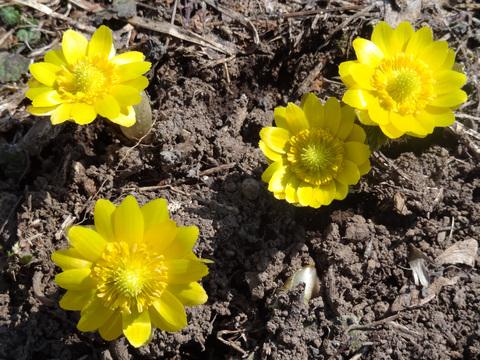 春です_a0233551_1984654.jpg