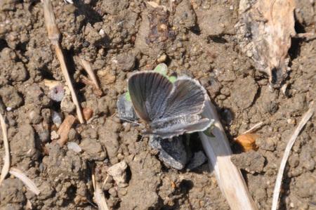 2012年4月の蝶_e0194952_7382259.jpg