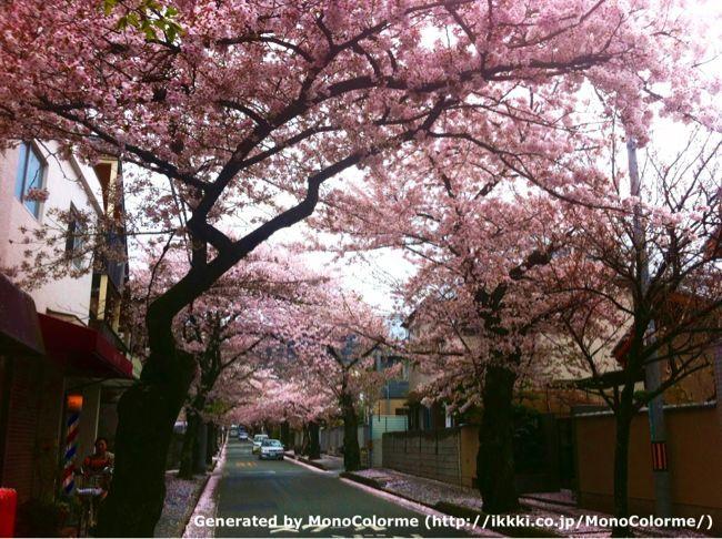 2012 SAKURA_a0135756_23262055.jpg