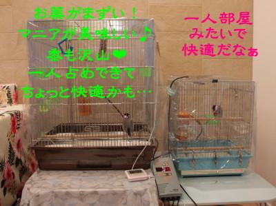 b0158061_2234505.jpg