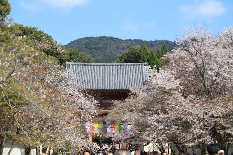桜<醍醐寺>_c0180971_1154599.jpg
