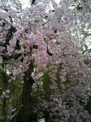 お花見_e0248573_16335152.jpg