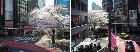 散歩を楽しく/今シーズンは最後の花見_d0183174_8171114.jpg