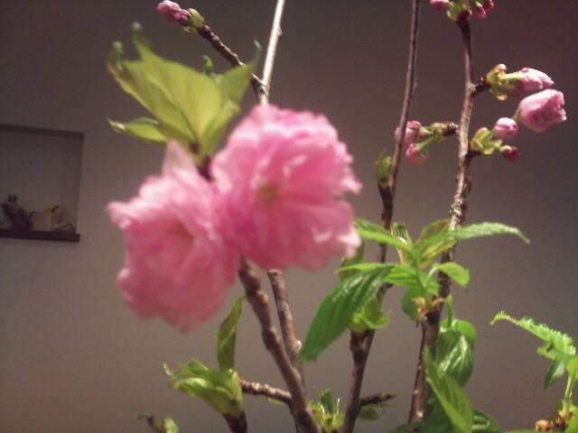 春を彩る食材たち_e0275281_18132236.jpg