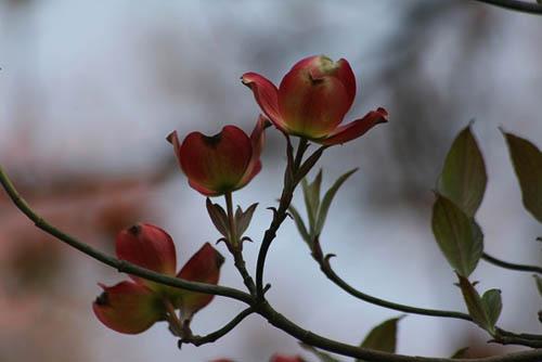 菜の花畑と、シジュウカラ_f0030085_21285493.jpg