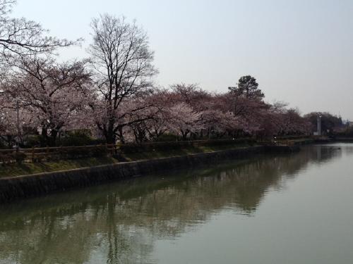 「桜」諸々画像_f0201286_15554452.jpg