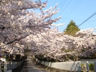 「桜」諸々画像_f0201286_15572513.jpg
