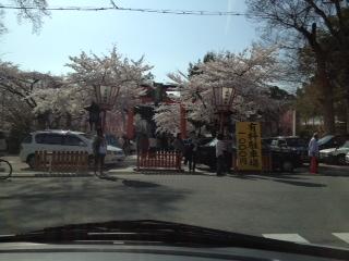 「桜」諸々画像_f0201286_15584064.jpg