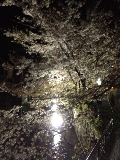 「桜」諸々画像_f0201286_15594656.jpg
