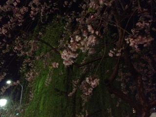 「桜」諸々画像_f0201286_1605249.jpg